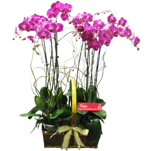 8 Dallı Fuşya Orkide Sepeti