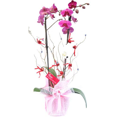 Çift Dallı Fuşya Orkide ve Kalpler